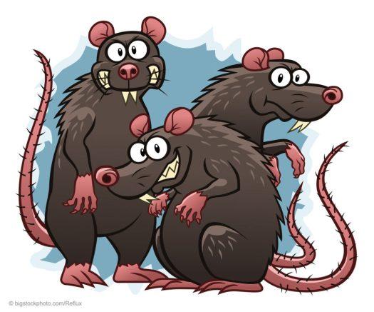 Our Ancestor Was a Rat