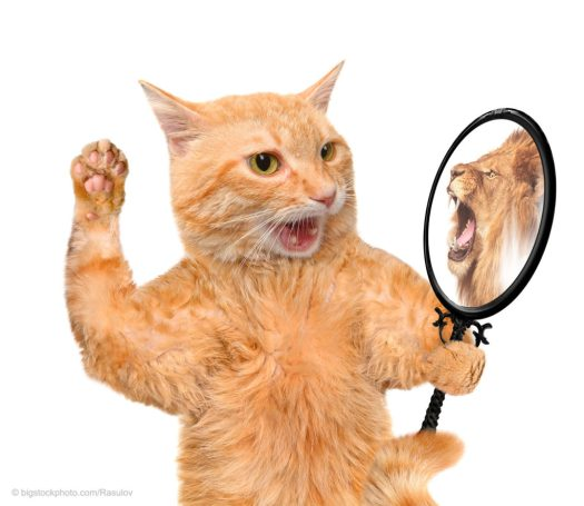Virtual Faith - Cat with Mirror