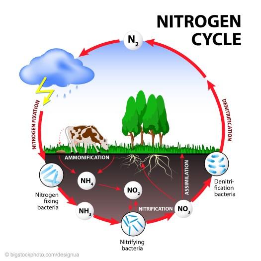 Nitrogen Mystery Answered