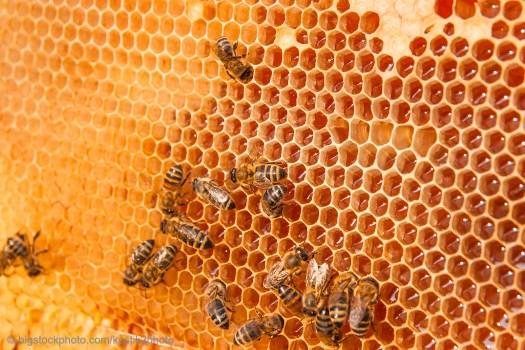 Honeybee Engineering