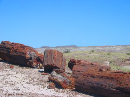Conflict Between Scientific Evidence and the Bible- Petrified Forest