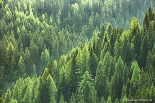 Trees, Carbon Dioxide, and Global Warming