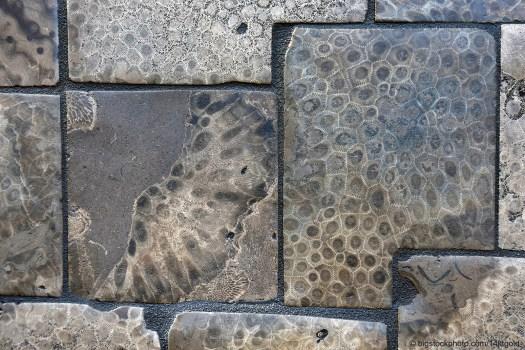 Petoskey Stone Tiles
