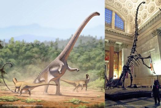 Dinosaur Blood Pressure in Barosaurus