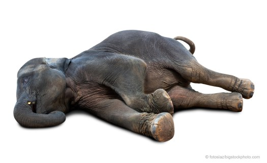 Elephant Wakes and Anthropomorphism