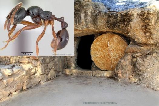 Doormaker Ants and Sealed Doorways