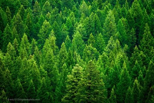 Design of Evergreen Trees
