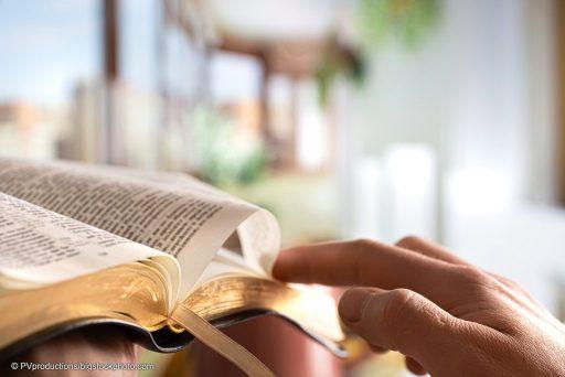 Bibles Human Authors