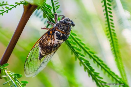 Mystery of Cicada Wings and Raindrops