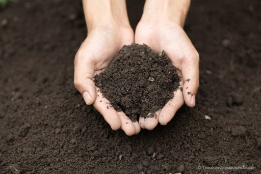 Good Soils Are Vital for Survival