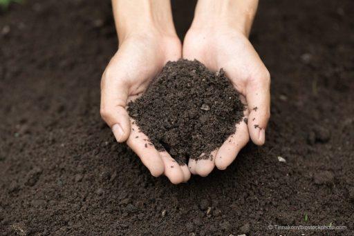 Good Soils Are Vital for Survival