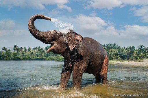 Designing an Elephant Trunk