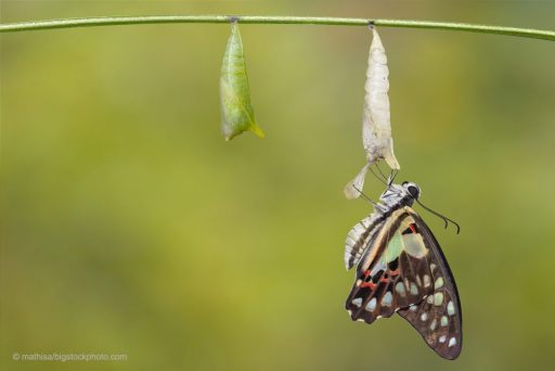 Lesson from a Butterfly