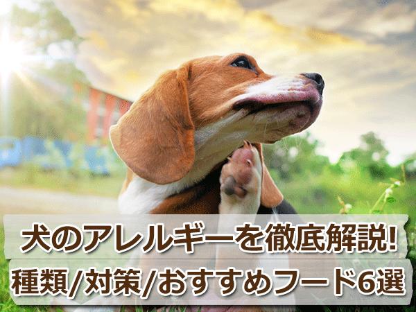 犬の食物アレルギーと対策、おすすめドッグフードランキングを紹介