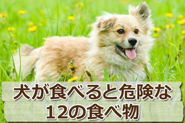 犬が食べてはいけない12の食べ物