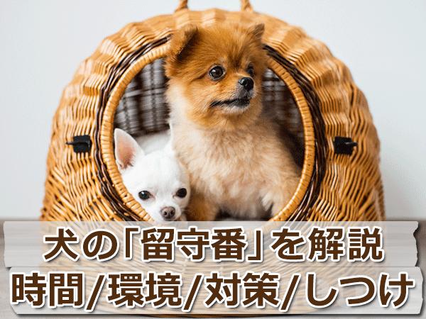 犬の留守番を徹底解説【時間・環境・対策・しつけ】まとめ
