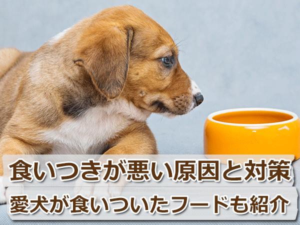 愛犬のフードの食いつきが悪い8つの理由