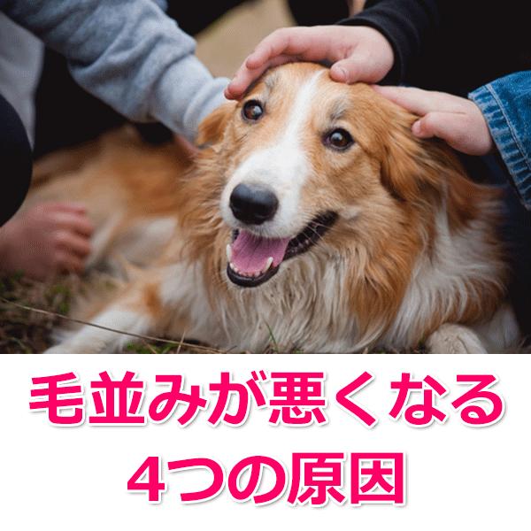 犬の毛並み・毛艶が悪い場合に考えられる原因