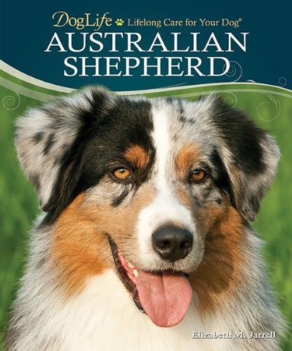 Things You Need To Know Before Choosing The Australian Shepherd Breed For Your Household