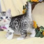 cat1608-00093_03