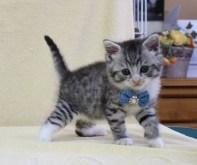 cat1608-00094_03