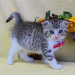 cat1608-00095