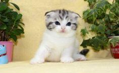 cat_img_2_76d8b4d2f282