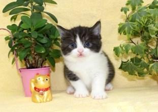 cat_img_4_fb69c8438f72