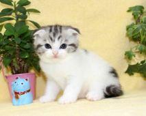 cat_img_4_thumb_pc_b163f504d9b0