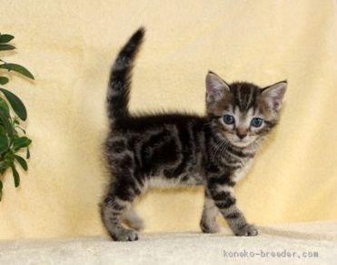cat_img_2_773957ee7044