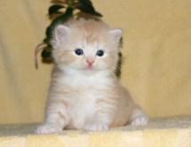 cat_img_2_e7eeb19cfcd0