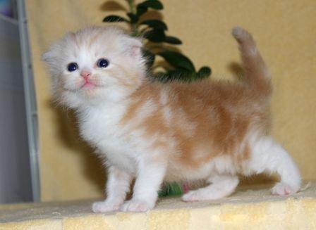 cat_img_3_c3cdbb1e9118