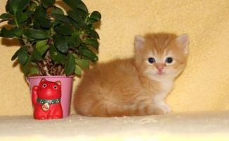 cat_img_4_94c93269bbe4