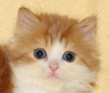cat_img_1_a4863e313277
