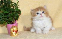 cat_img_4_fdd8c3bbc2f0