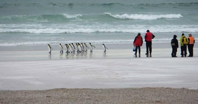 Falkland Adaları Gezilecek Yerler