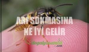 Arı Sokmasına Ne İyi Gelir