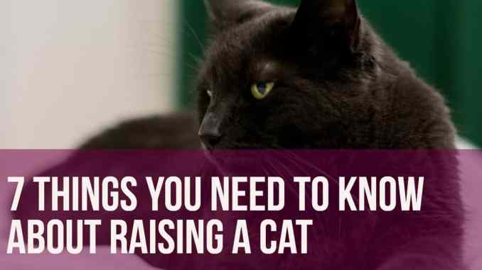 7 Things You Need To Know About Raising A Cat
