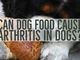 Can Dog Food Cause Arthritis In Dogs