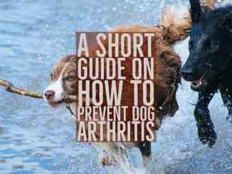 How To Prevent Dog Arthritis