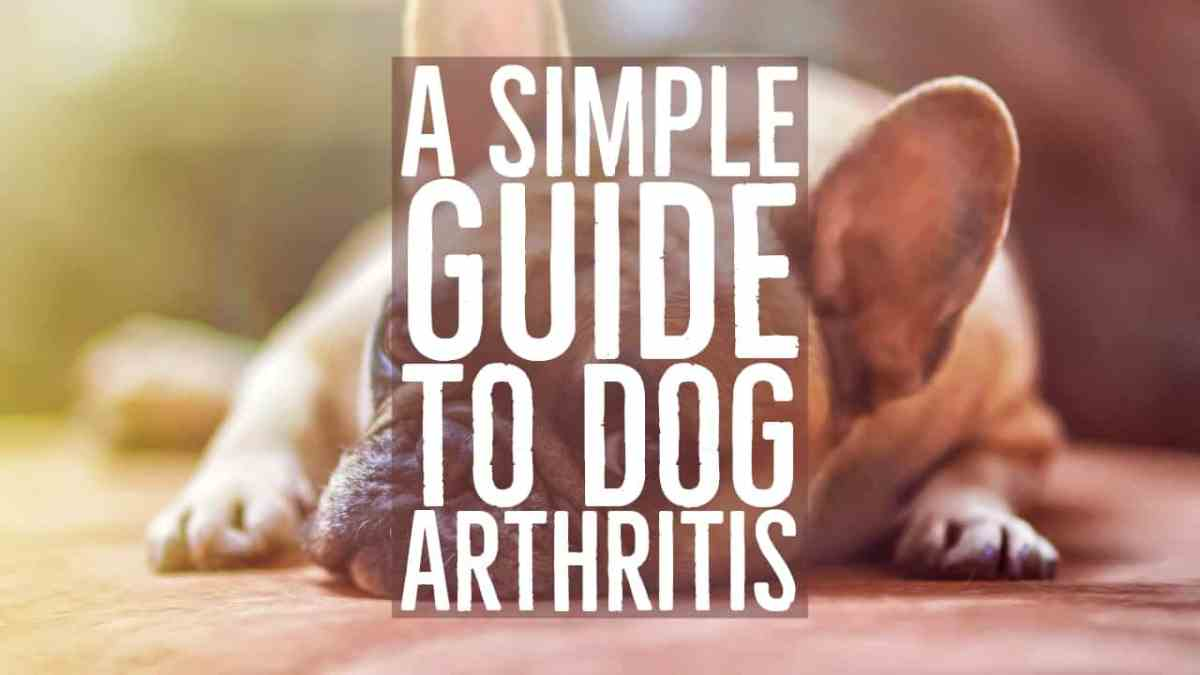 A Simple Guide to Dog Arthritis
