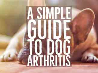 guide to dog arthritis