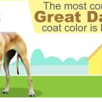 8 Different Great Dane Colors And Patterns With Amazing Pictures Dogappy