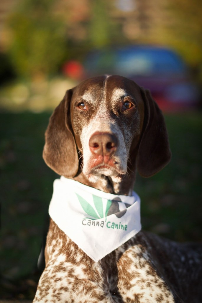 cbd-oil-for-dogs