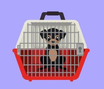 1.House Crate Training Where To Eliminate