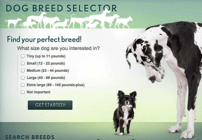 How to Pick the Perfect Dog for Your Personality Type