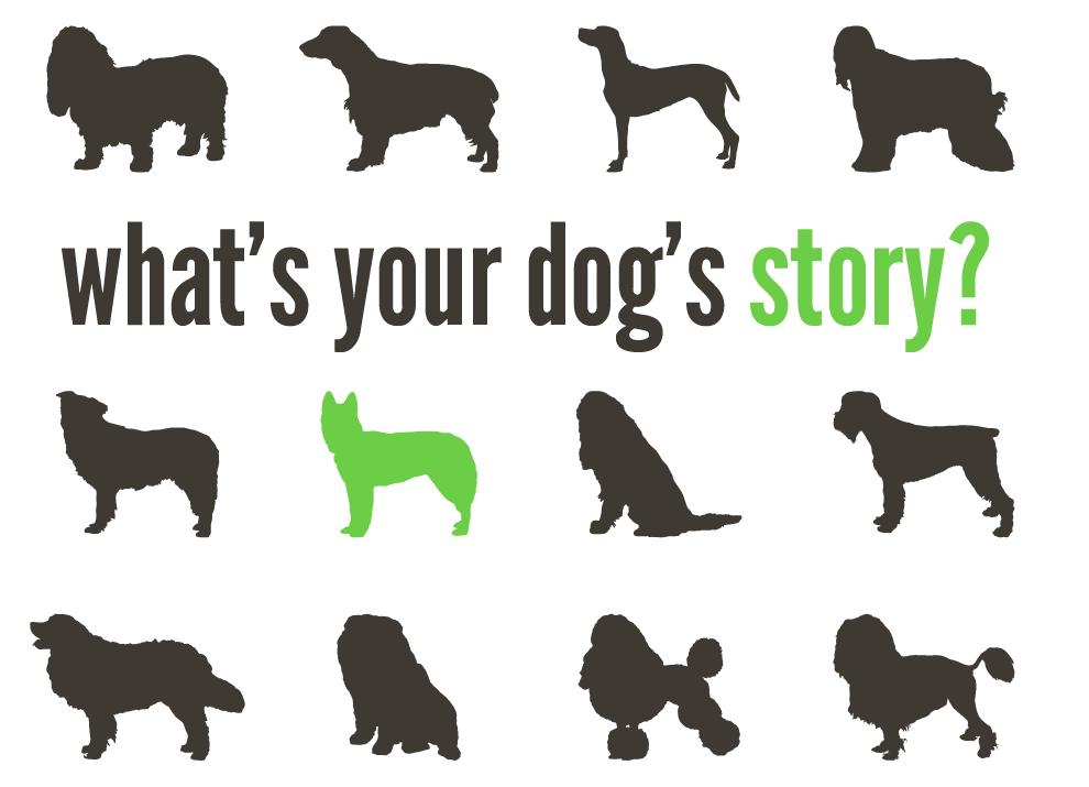 dogstory-01