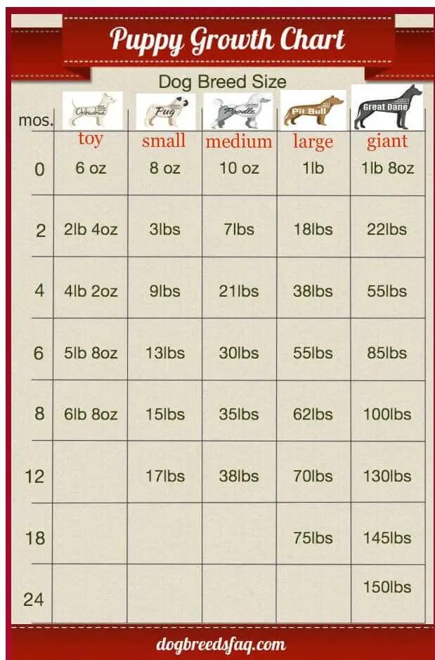 Pitbull Weight Chart   Blog Dandk