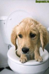 Запор у щенка причины симптомы лечение