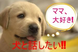犬と話したい